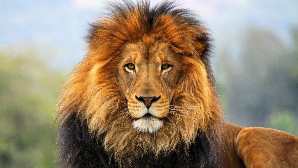 aslan easter