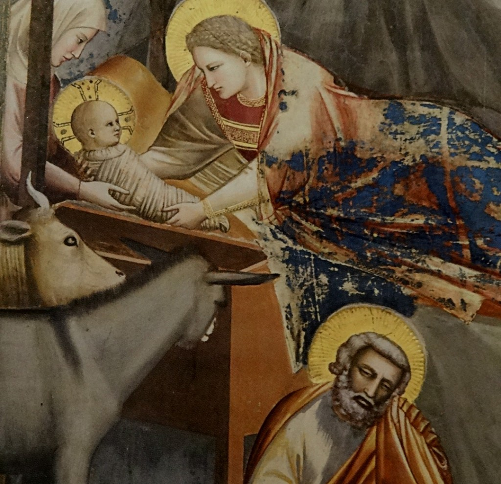 st joseph nativity giotto