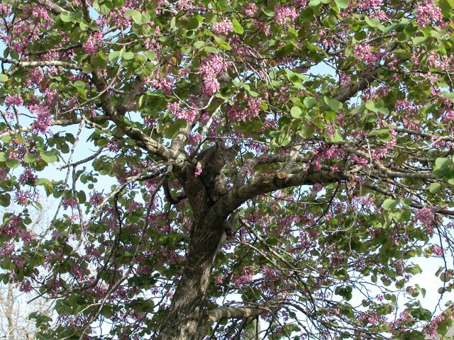 cross wood theodore life tree