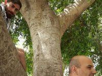Zaccheo – La Grazia Giunge all'Esattore