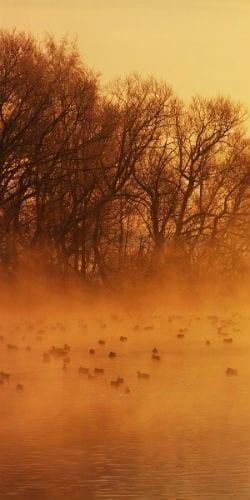 birds in a dust storm Born for us, Emmanuel - Irenaeus masonry