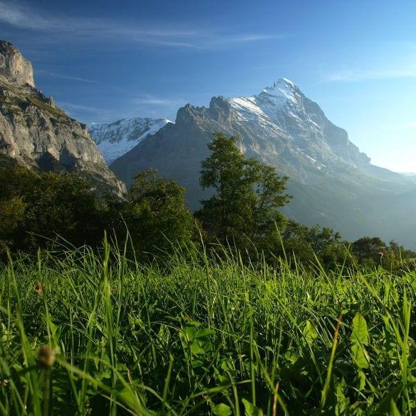 grass mountains Who am I to Judge? masonry