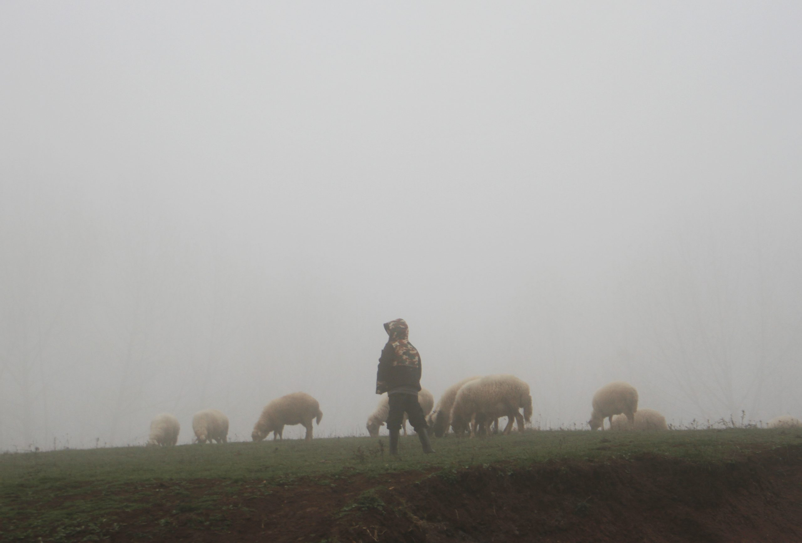 augustine on pastors seek out the lost sheep sermon 46