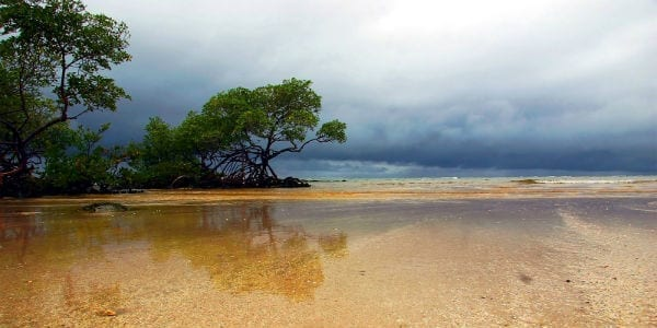 stormy beach awake and alert masonry