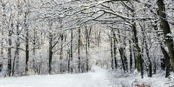 winter forest path masonry