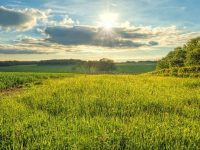 Heaven's Green Pastures – Gregory the Great