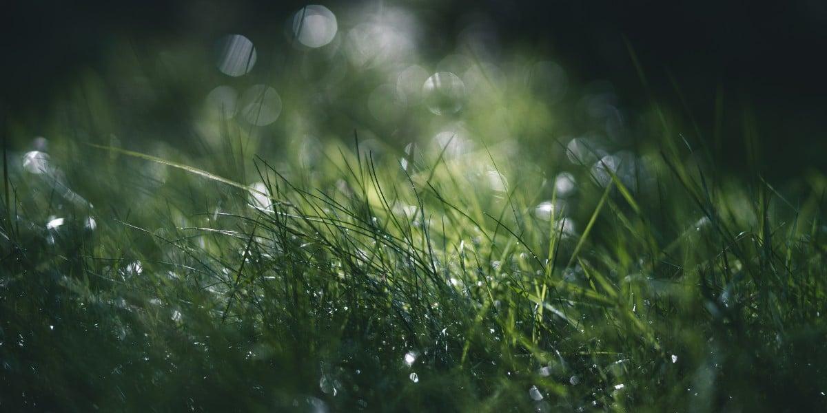 holy spirit irenaeus rainfall dew pentecost