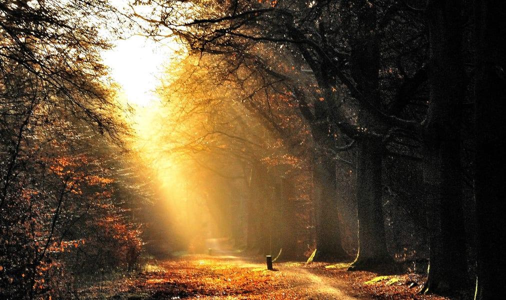 morning light trees