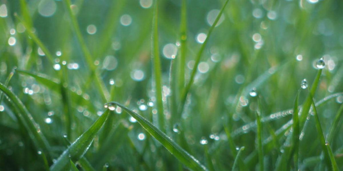 holy spirit irenaeus rainfall dew pentecost facebook