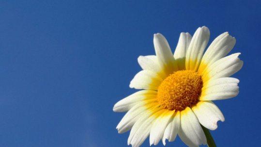 sunflower advent and hope masonry