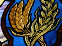 I Am God's Wheat - Ignatius of Antioch