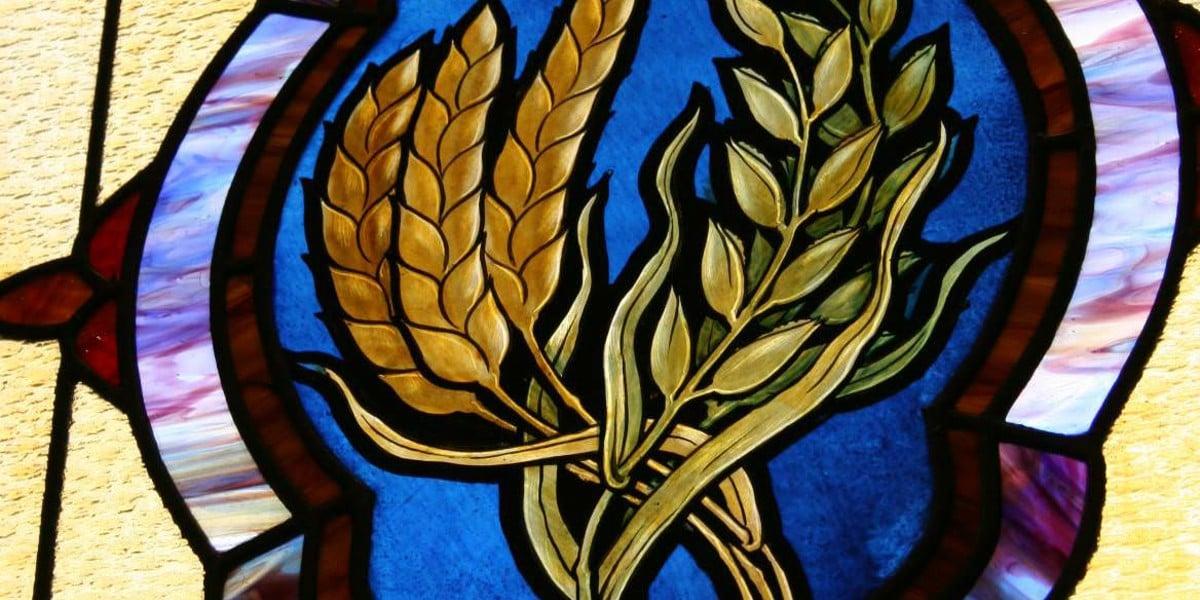 ignsaius antioch God's wheat sacrifice rome romans martyr