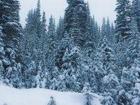 Christmas: Origins of the Feast