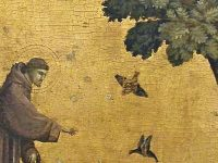 St. Francis, Animals and the Environment