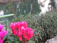 Jesus, John the Baptist & the River Jordan - Podcast