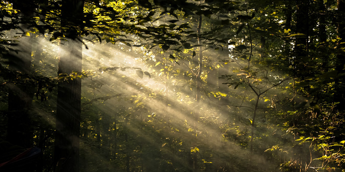 sun rays in forest ambrose coheirs with Christ saved in hope galatians law creation groans